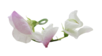natali_design_baby11_flower12.png