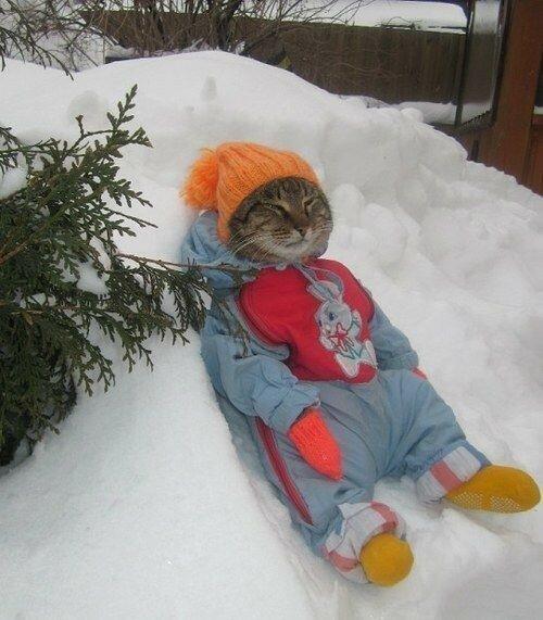 Они рвутся на улицу даже зимой, несмотря на то, что мёрзнут уже через 5 минут и просятся обратно в дом.
