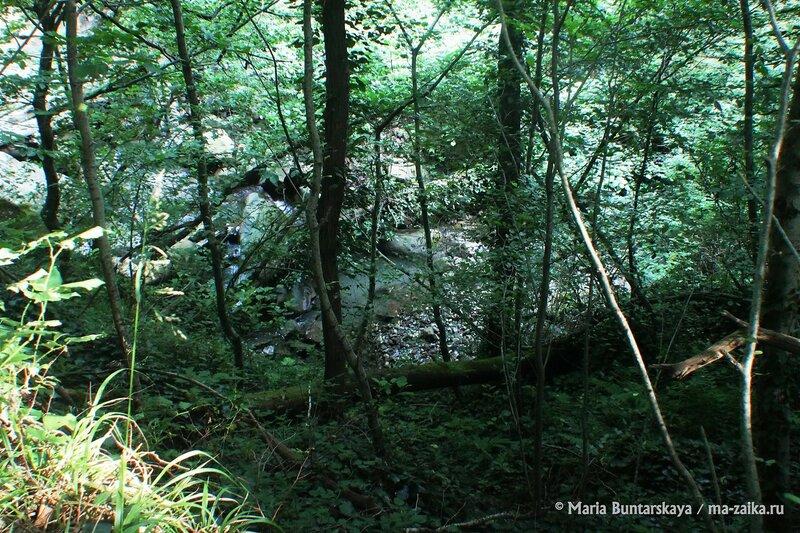 Свирское ущелье, Краснодарский край, Сочинский национальный парк, 14 июля 2014 года