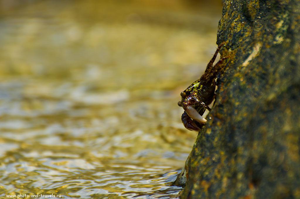 15. На острове Ко Лан можно не только плавать и загорать, но и устроить фотоохоту на местную живность. Результат охоты с объективом Nikon 70-300 и зеркальной камерой Nikon D5100. Настройки: В=1/250s, A, f/5.6, 300 мм, 100