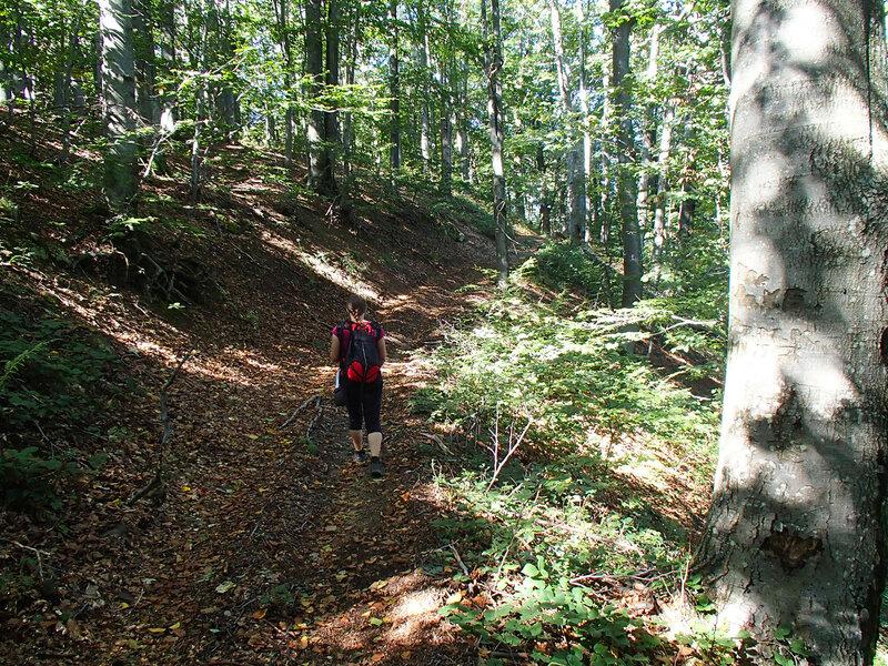 Ком - Емине, дорога по буковому лесу