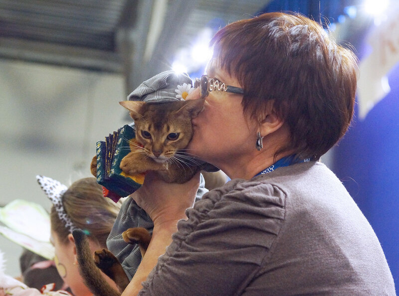 Конкурс костюмов на выставке кошек