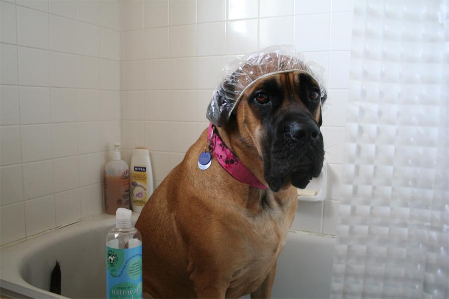 хитрости для владельцев собак