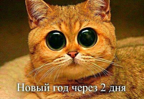 Новый Год через 2 дня...ОФИГЕТЬ  :))))