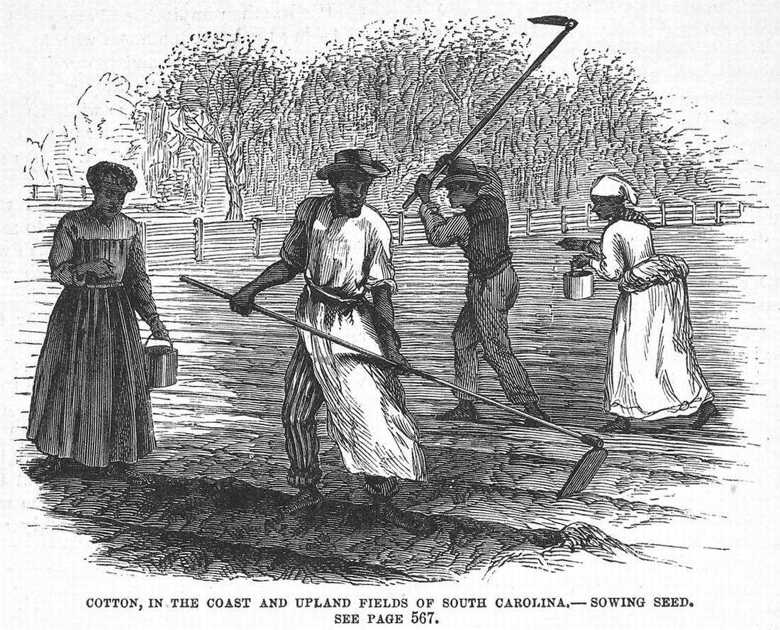 Рабы на посадке семян хлопчатника (штат Южная Каролина, 1880 год)