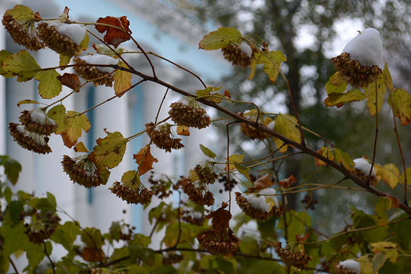 осень под снегом