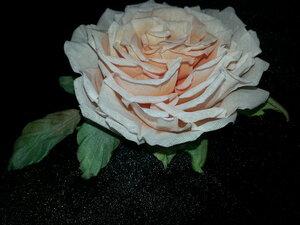 Роза - царица цветов 3 - Страница 2 0_106267_cf9dc551_M