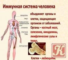 Книга Как работает иммунная система человека?