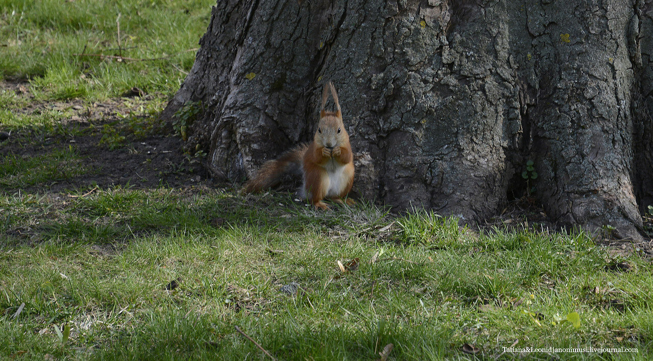 Весна в Гомельском парке