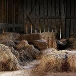 Утро на ферме