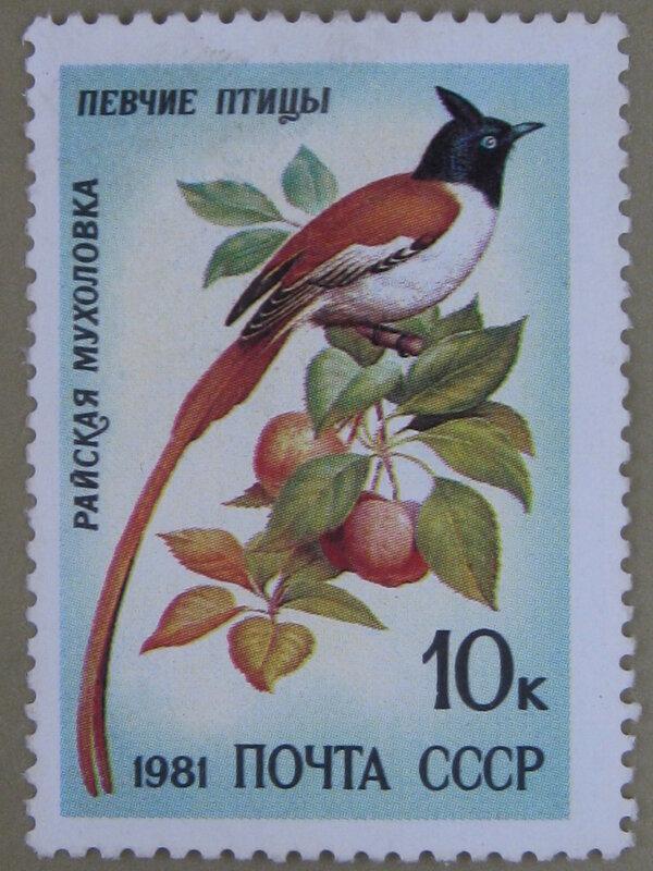 Райская мухоловка (Terpsiphone paradisi).