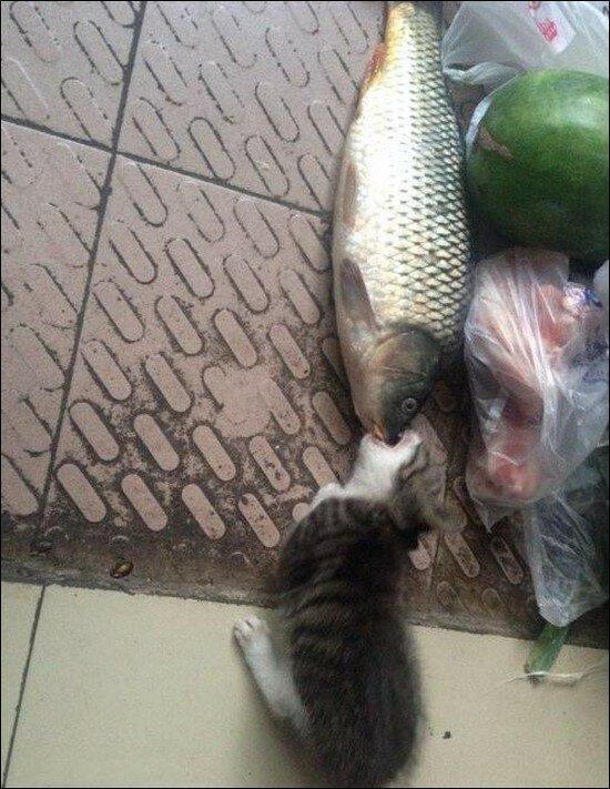 кот ест большую рыбу