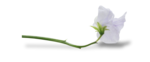 natali_design_baby11_flower13-sh1.png