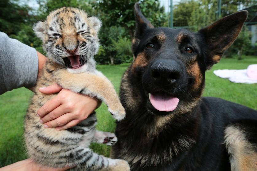 Животные из разных уголков мира