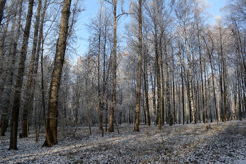 парк почти зима7