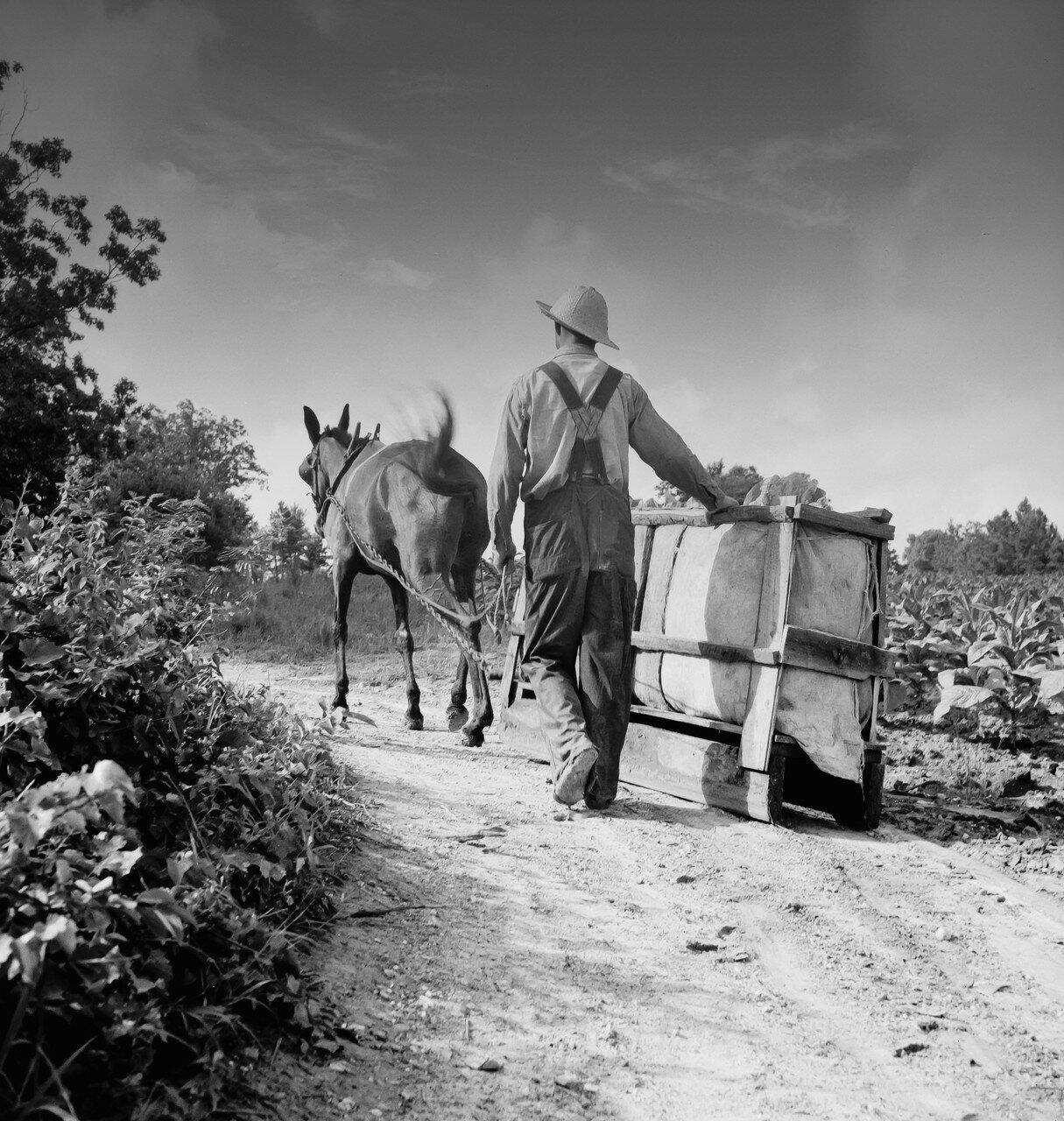 1935-1942. Сборщик табака