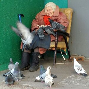 Старушка кормит голубей