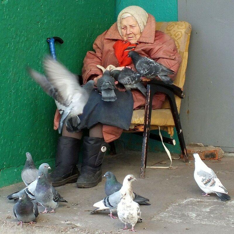 картинки старушка кормит голубей лоха доля