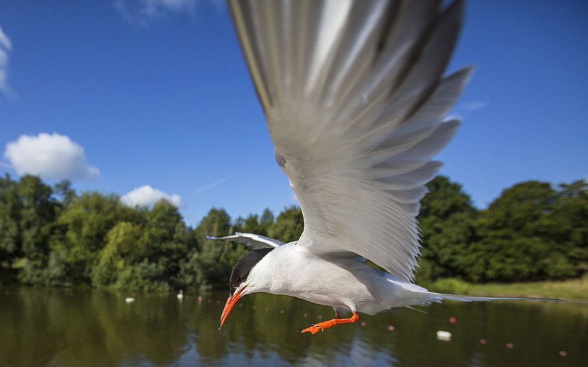 Дикий мир с Мэтью Маран (Matthew Maran)