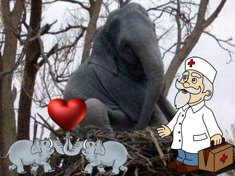 слон в гнезде.jpg
