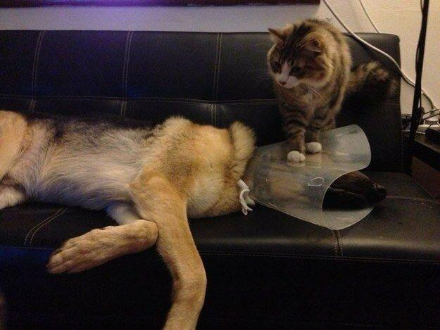 Они жестоки и высокомерны по отношению к другим животным, даже если те относятся к ним со всей душой.