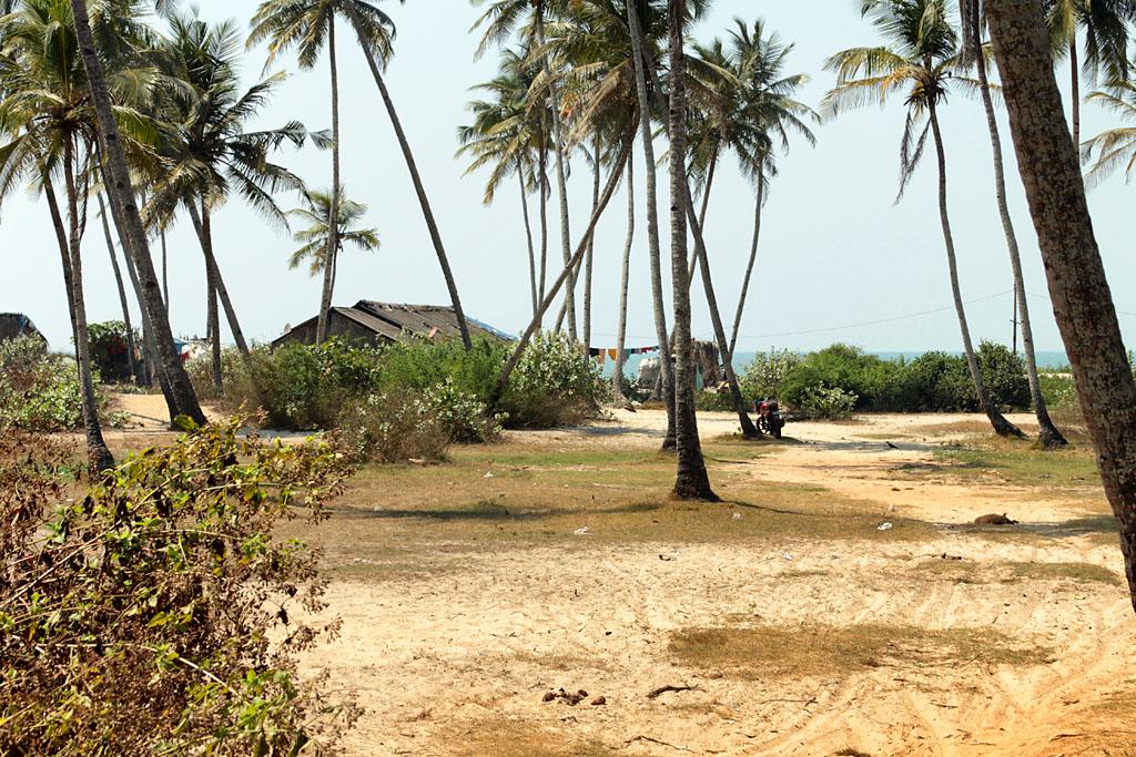 Фото 4. Гоа. Индия. Море и пальмы. Что еще нужно для отдыха?