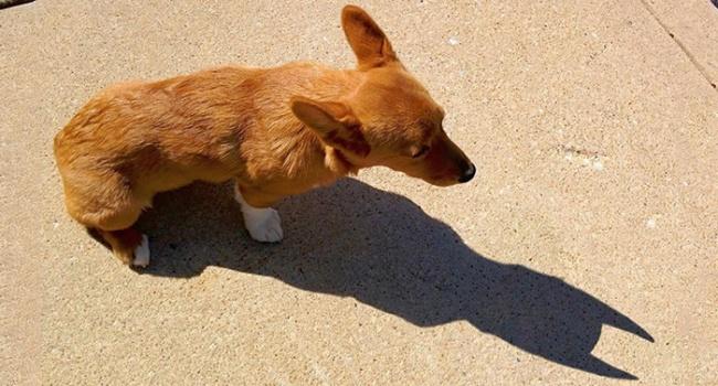 собака и тень