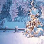 zpriss-christmaseve_paper (7).jpg