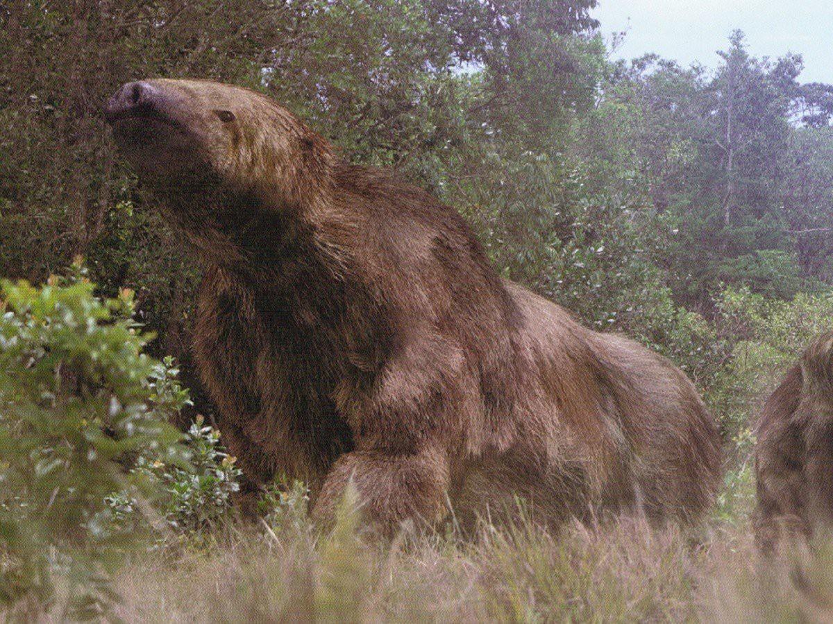 Мегатерий имел надежный скелет с большим тазовым поясом и широким мускулистым хвостом. Большой разме