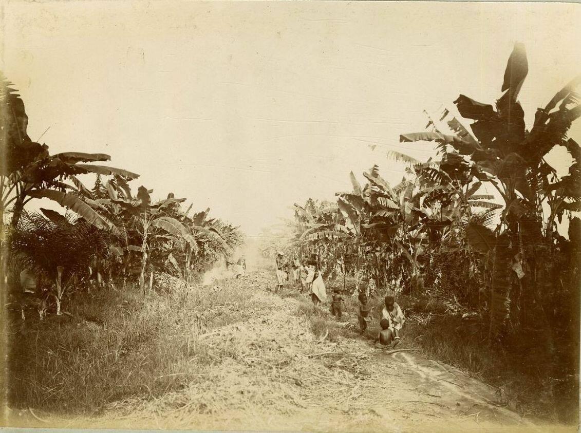 Банановая плантация
