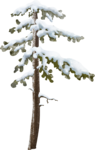 mzimm_snowflurries_tree.png