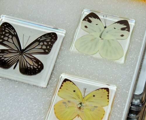 Бабочки №98 - Бабочка белянка (Talbotia naganum)
