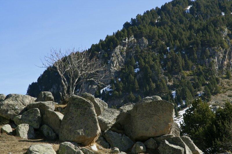 камни и дерево