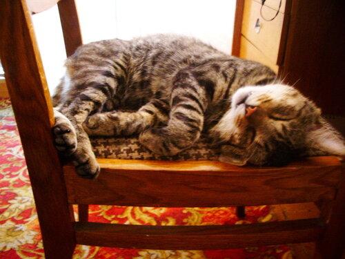 aslauk — «Кот Вася» на Яндекс.Фотках