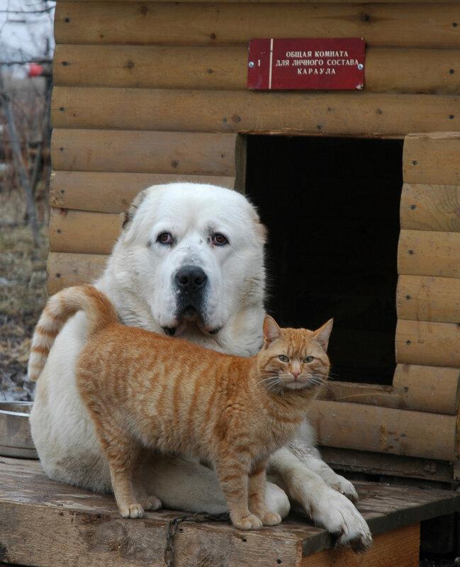 Два друга. Пес и кот