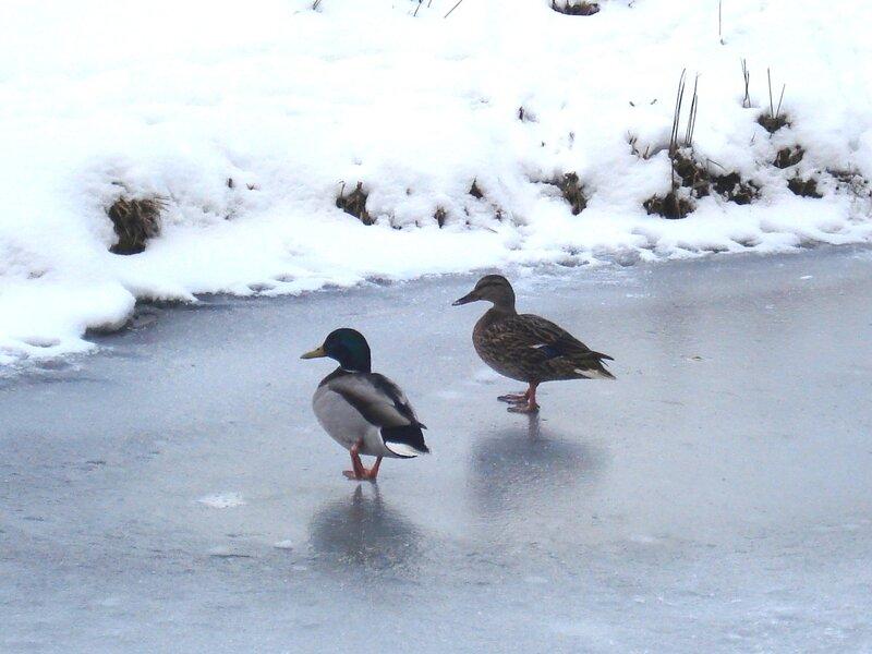 Вдвоём по тонкому льду