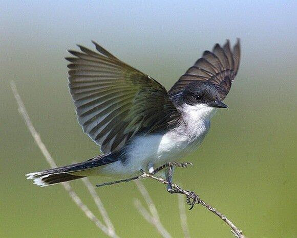 смотрите еще цветные кольца птицы купить, птица колибри купить и птица с красной головой рыболов. самодельные игрушки...