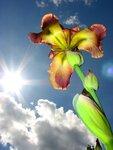Цветы (мой сад)