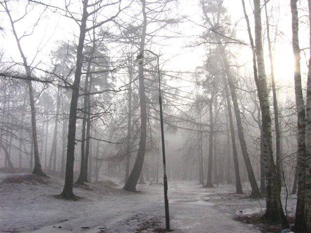 Лесной фонарь