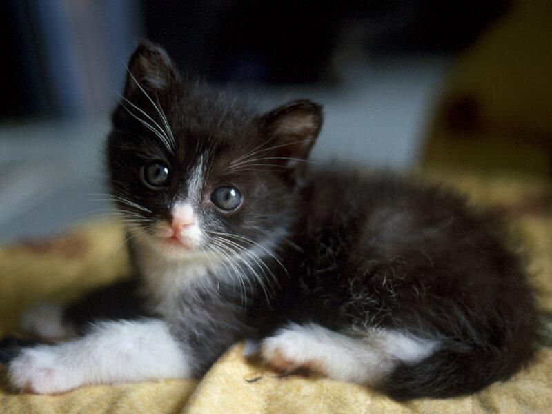 Красивые и профессиональные фото котов 0_123cf_be857eb3_XL