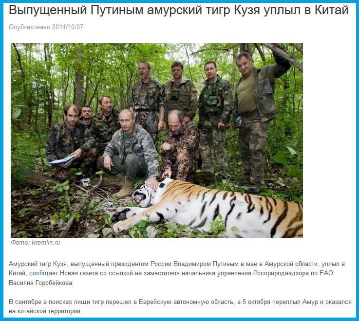 Амурский тигр Владимира Путина, Кузя, сбежал к китайцам