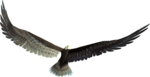 sd_woodland-winter-eagle.png