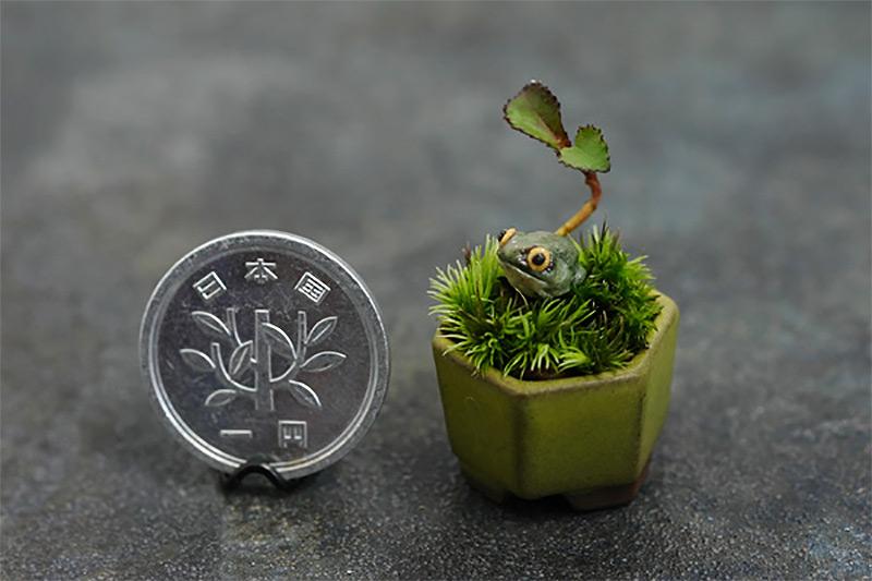 Чой-мини бонсай и ультра-маленький бонсай