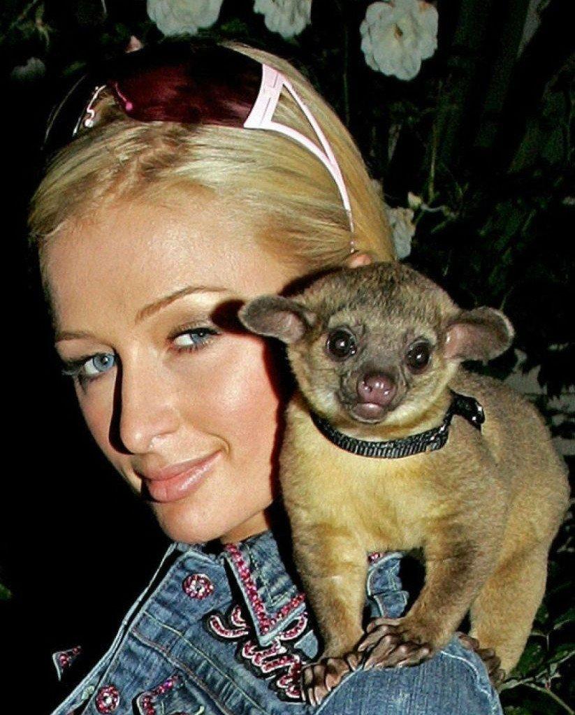 Пэрис Хилтон является владелицей многочисленных животных, не все из которых её любят. К примеру, это