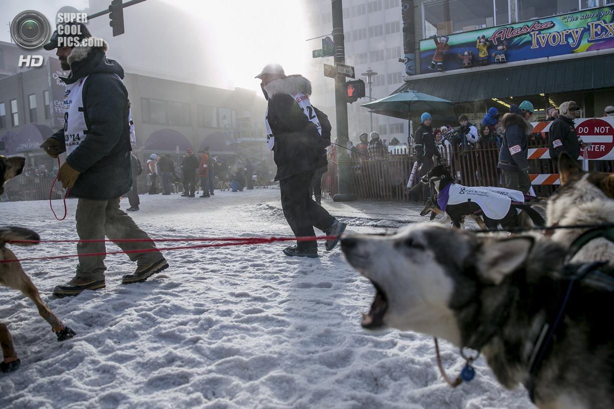 США. Анкоридж, Аляска. 1 марта. Некоторые собаки выражают своё нетерпение лаем. (REUTERS/Nathaniel W