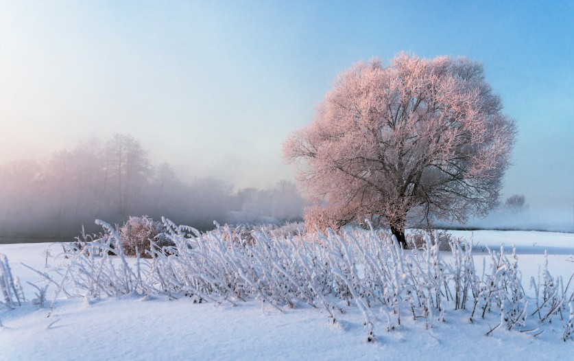 Фото: Сергей Пеккер, «Розовое дерево»