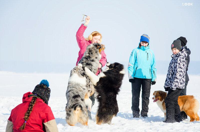 Мои собаки: Зена и Шива и их друзья весты - Страница 8 0_a83cb_6517a650_XL