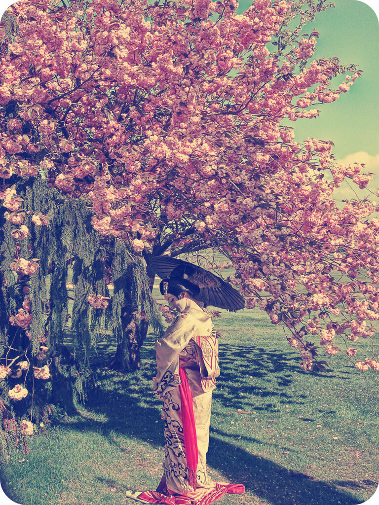 Cherry_Blossom_Girl_by_ISIK5.jpg