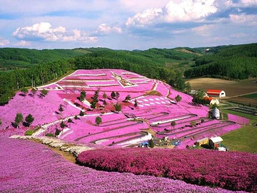 Цветущий розовым японский парк Хицудзияма. Фотографии 0 141ad4 1efd006e orig