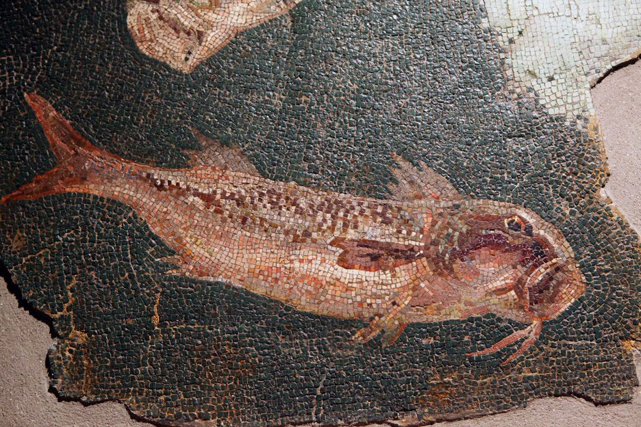 Roman mosaic: a fish